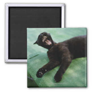 A yawning cat. 2 inch square magnet