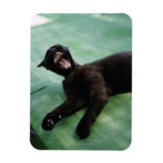 A yawning cat. rectangular photo magnet
