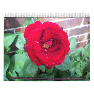 A Year in Roses Calendars