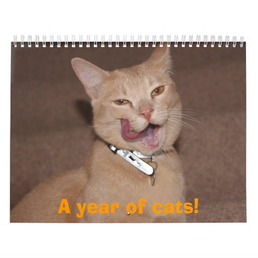 A year of cats! calendar