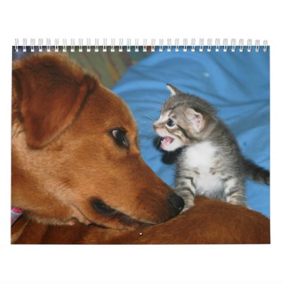 A year of kittens wall calendars
