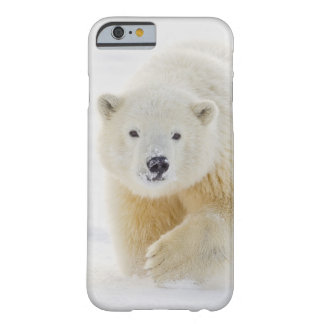 A yearling polar bear cub plays in the snow iPhone 6 case