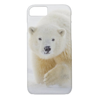 A yearling polar bear cub plays in the snow iPhone 7 case