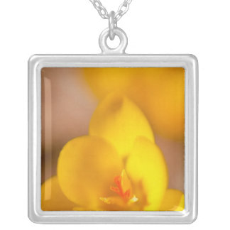 A yellow crocus blooms in Portsmouth, New Square Pendant Necklace