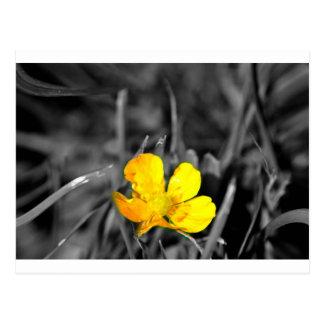 a yellow flower postcard