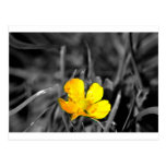 a yellow flower postcards