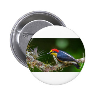 A Yellow Fronted Woodpecker in Brazil Pinback Button