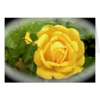 A Yellow Rose is for Friendship Card