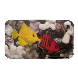 A Yellow Tang Case-Mate iPhone 3 Case