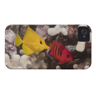 A Yellow Tang iPhone 4 Case-Mate Case