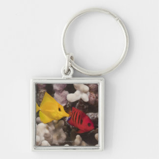 A Yellow Tang Keychain