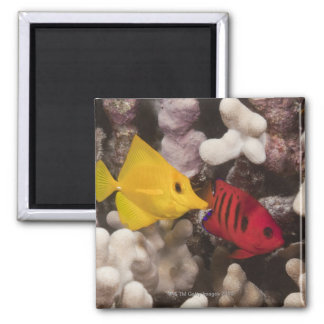 A Yellow Tang Refrigerator Magnet