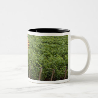 A yellow tractor crossing sign in the vineyard coffee mugs
