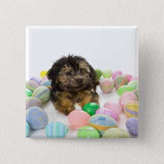 A Yorkie-poo puppy and Easter eggs. Button