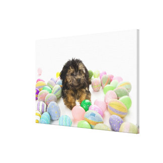 A Yorkie-poo puppy and Easter eggs. Canvas Print