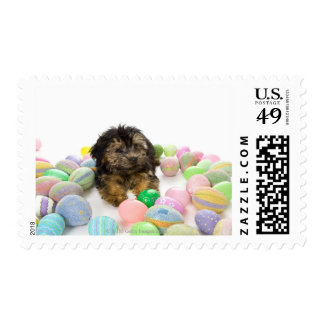 A Yorkie-poo puppy and Easter eggs. Postage Stamp