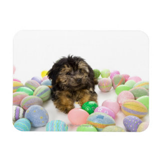 A Yorkie-poo puppy and Easter eggs. Rectangular Photo Magnet