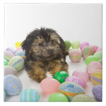 A Yorkie-poo puppy and Easter eggs. Tile