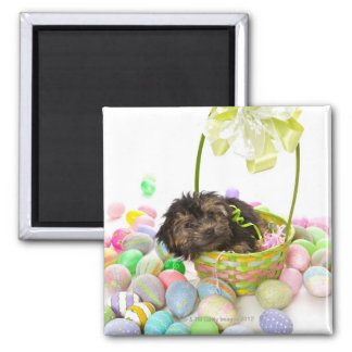 A Yorkie-poo puppy encountering an Easter basket 2 Inch Square Magnet