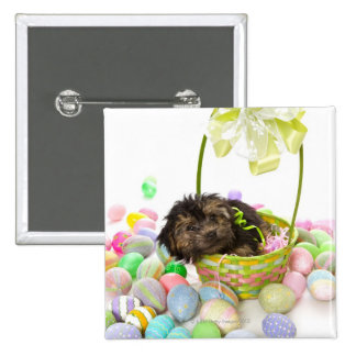 A Yorkie-poo puppy encountering an Easter basket Button