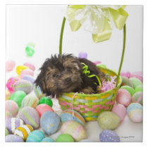 A Yorkie-poo puppy encountering an Easter basket Ceramic Tile