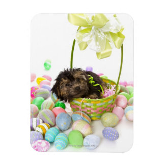 A Yorkie-poo puppy encountering an Easter basket Rectangular Photo Magnet