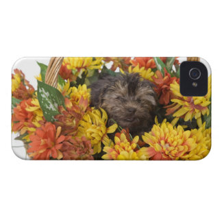 A Yorkie-Poo puppy in a basket of artificial iPhone 4 Case-Mate Case