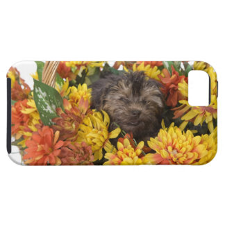 A Yorkie-Poo puppy in a basket of artificial iPhone SE/5/5s Case