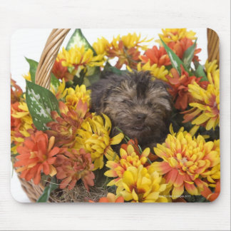 A Yorkie-Poo puppy in a basket of artificial Mouse Pad