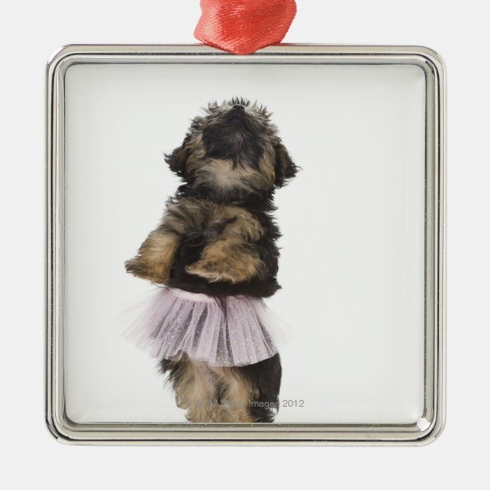 A Yorkie-poo puppy in a tutu on her hind legs. Metal Ornament
