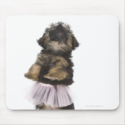 A Yorkie-poo puppy in a tutu on her hind legs. Mouse Pads