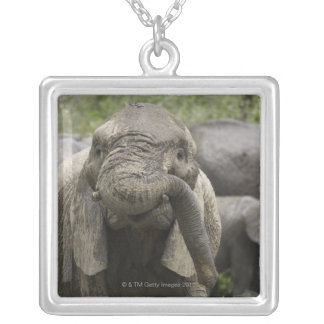 A young African elephant (Loxodonta africana) Square Pendant Necklace