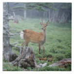 A young deer in a forest clearing ceramic tiles