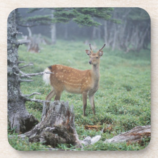 A young deer in a forest clearing drink coaster