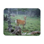 A young deer in a forest clearing flexible magnets