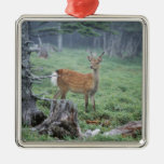 A young deer in a forest clearing ornaments