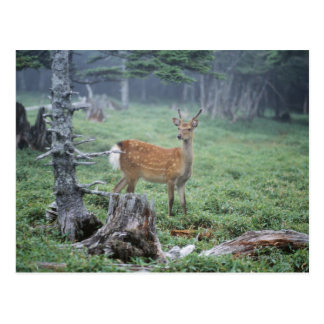 A young deer in a forest clearing postcard