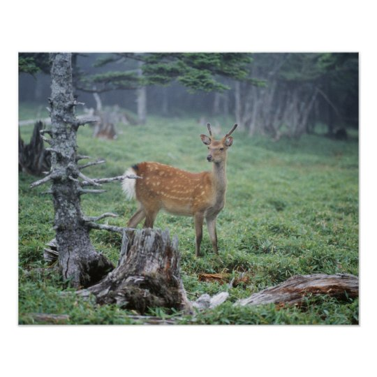 A young deer in a forest clearing poster