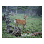 A young deer in a forest clearing posters