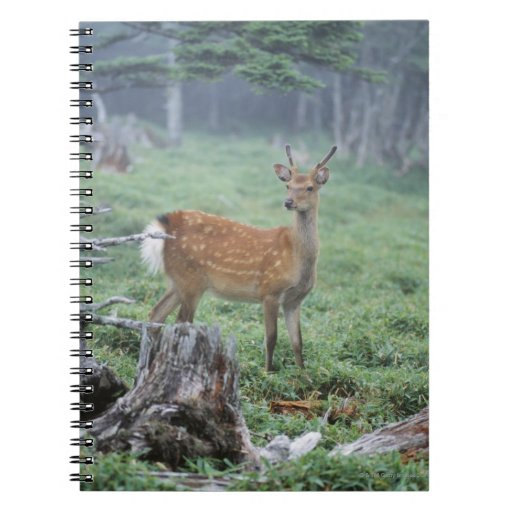 A young deer in a forest clearing spiral notebook