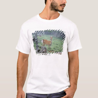 A young deer in a forest clearing T-Shirt