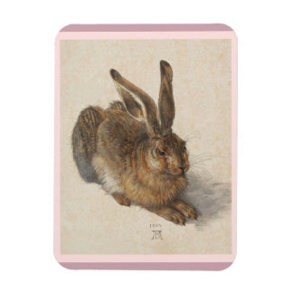 A Young Hare Magnet