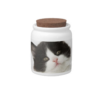A young kitten sitting looking into the camera candy jars