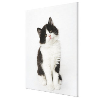 A young kitten sitting looking into the camera. canvas print