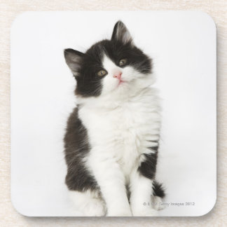 A young kitten sitting looking into the camera. coaster