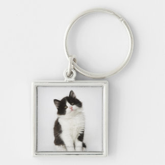 A young kitten sitting looking into the camera. keychain
