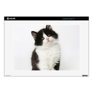 A young kitten sitting looking into the camera laptop decals