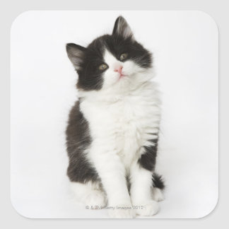 A young kitten sitting looking into the camera square sticker