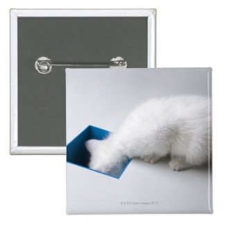 A Young Kitten Stretches His Head Down a Square Pinback Button