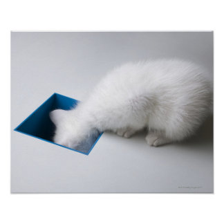 A Young Kitten Stretches His Head Down a Square Posters